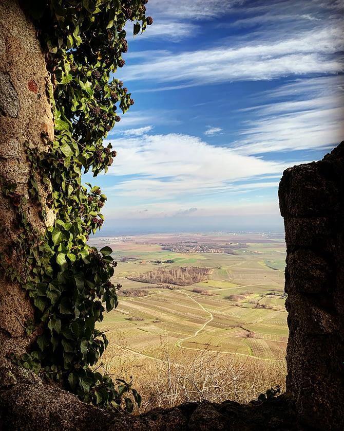 Un dimanche au Château de l'Ortenbourg #alsace #randonnée