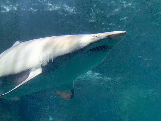 Escapade à l'aquarium de La Rochelle